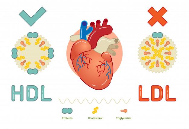 """Xét nghiệm HDL và LDL """"direct"""" như thế nào?"""